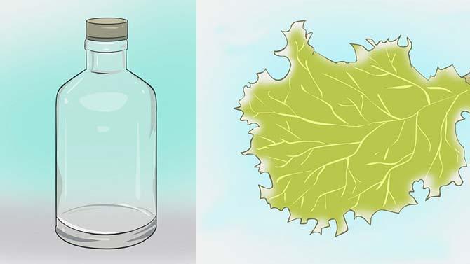 Подготовить пустую бутылку/банку и литья растений